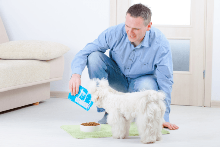 Young man feeding his dog on a schedule to help with excitement urination