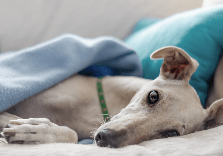 Tips For Planning Your Dogs Surgery