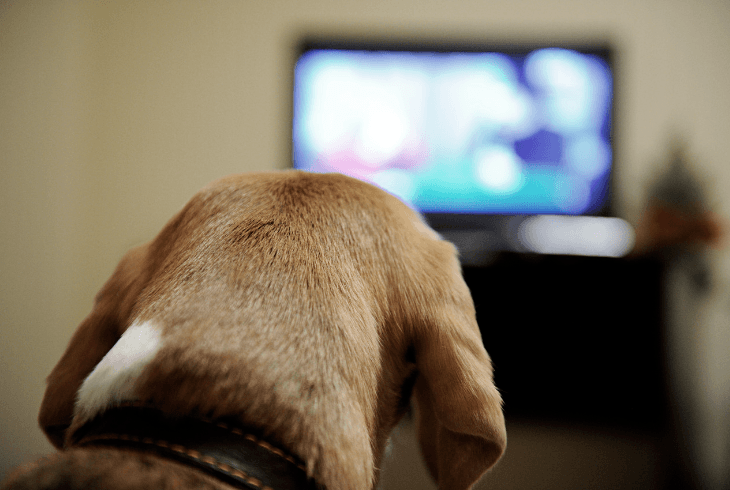 Canine watching Animal Planet on TV