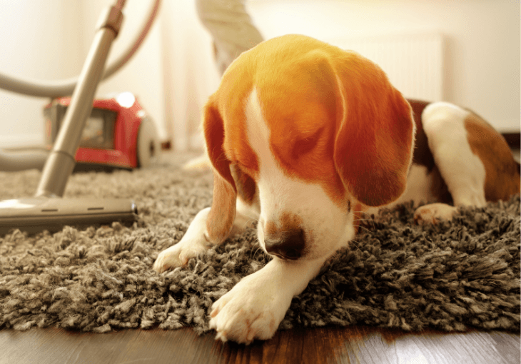 Five Spring Cleaning Tips For Households With Dogs
