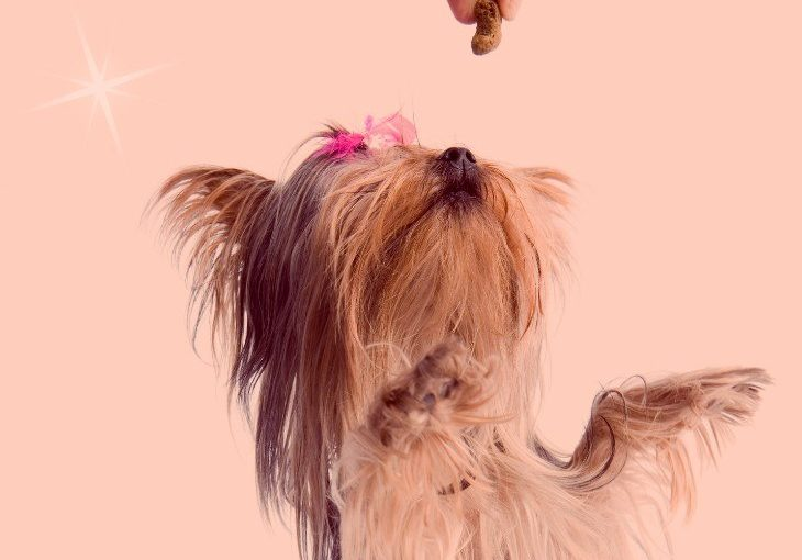 CBD for dogs, what you need to consider