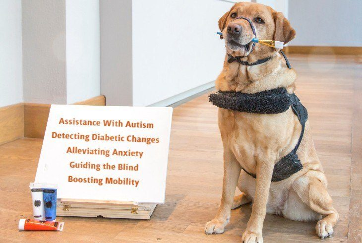 A canine beside a sign that list ways dogs can help with special needs