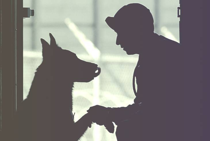 Silhouette of a canine and veteran