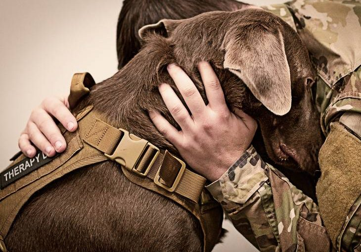 How dogs are helping veterans returning home