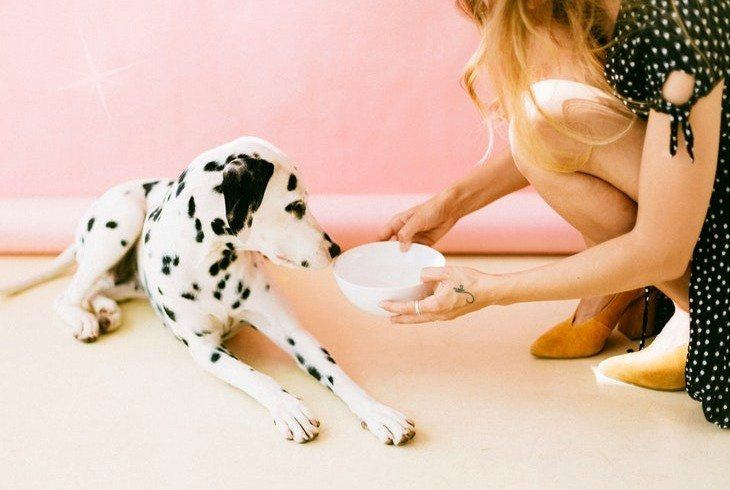 Pet mom giving her pup cbd for dogs