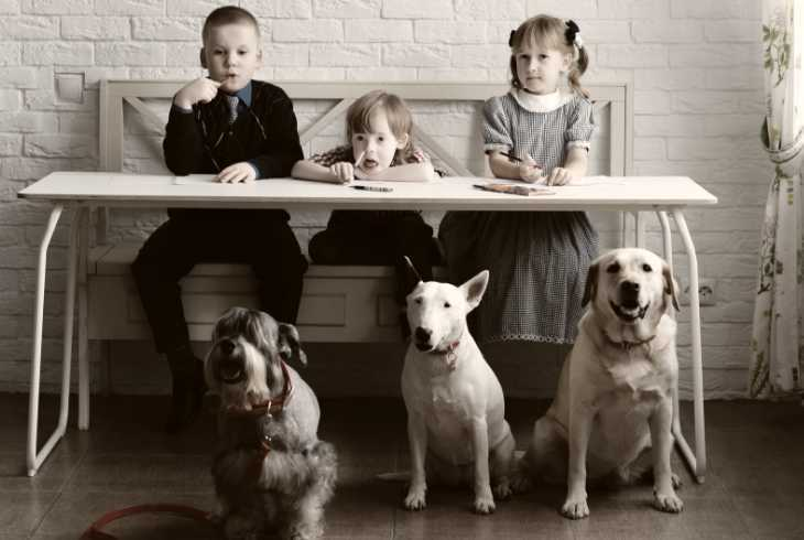 Three different breeds of dogs with three autistic children