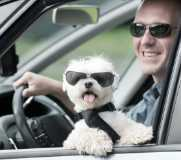 happy dog and owner on a solo road trip