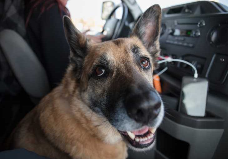 Tips for road tripping with your dog