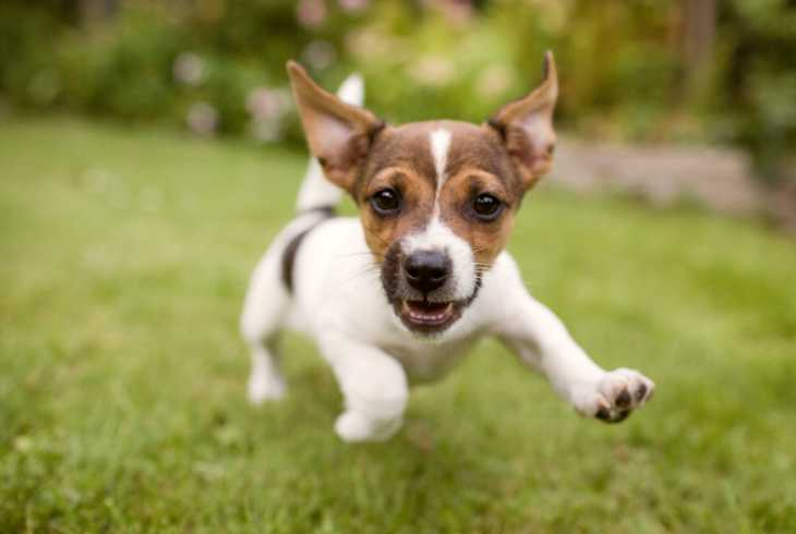 Happy playful puppy