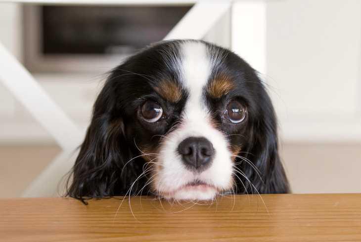 Canine with very sad eyes