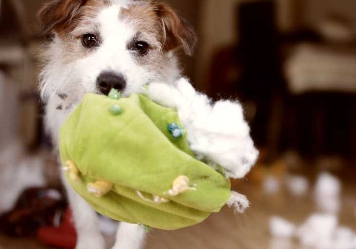 Here is help for dogs who destroy toys