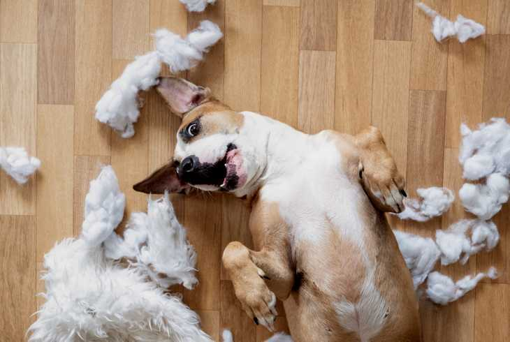 Playful dog among shredded pieces of dog toy