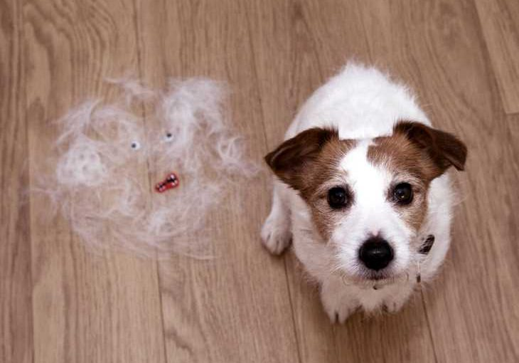 pet hair shedding and hair loss