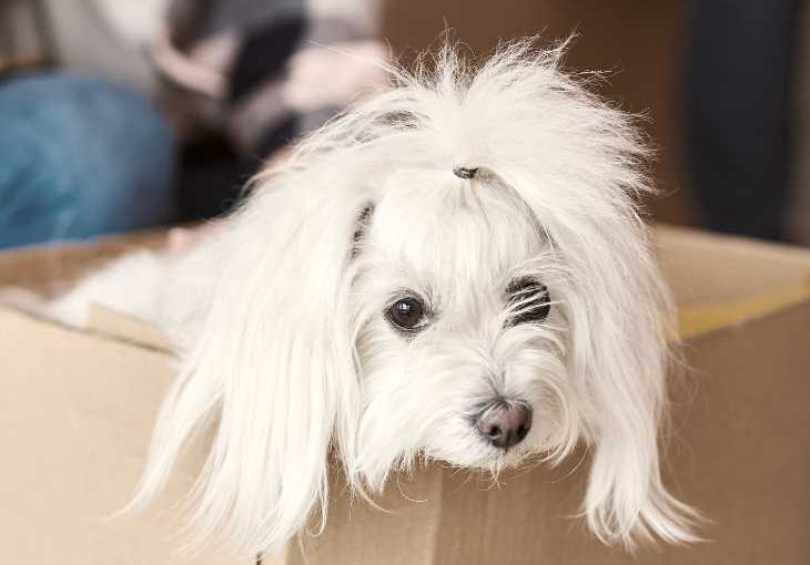 How to help your dog thrive during a move