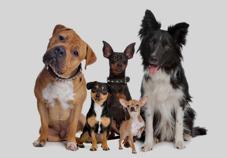 Ten most loyal dog breeds