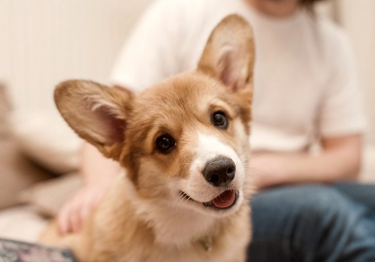 Here is how to be a prepared puppy parent