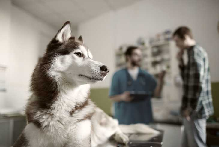 Dog owner watching the vet work on his dog