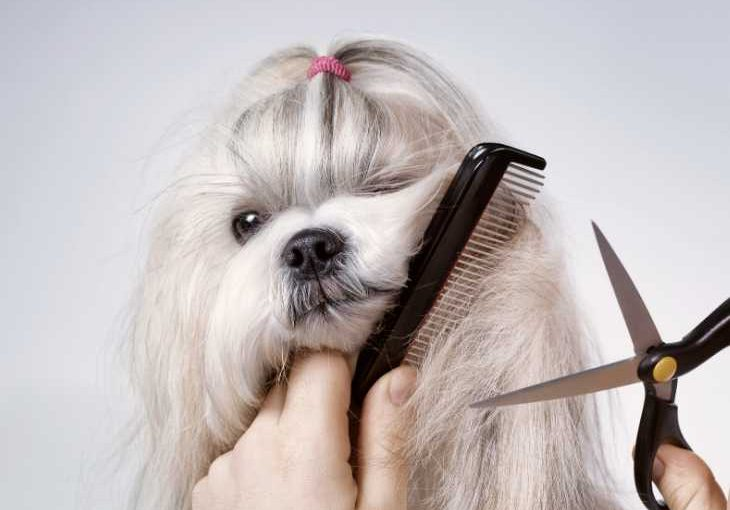 Six reasons to groom your dog