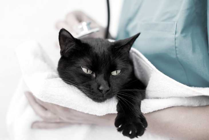 Nurse holding cat after spaying