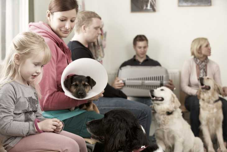 Pets and owners waiting at the veterinary clinic