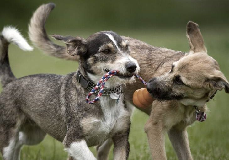 Eight games to play with your dog