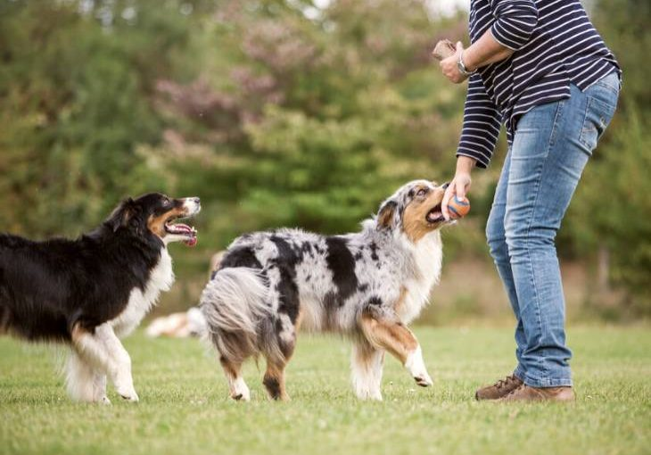 Ways a pet sitter can help dog behavior