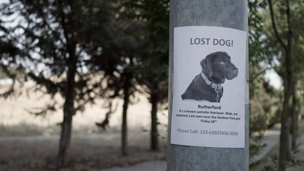 A poster for lost dog