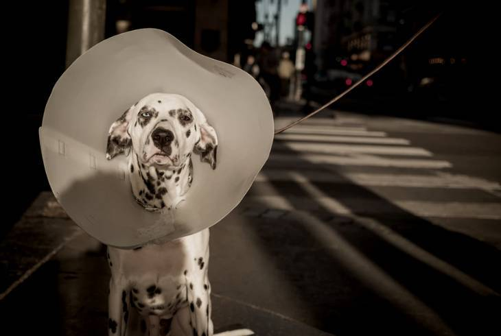 Dog barking because of illness