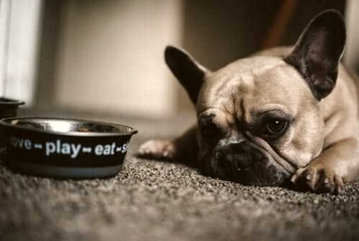Empty bowl beside physically distressed canine