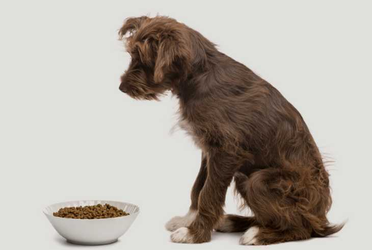 Bowl of high protein food and dog on grey background