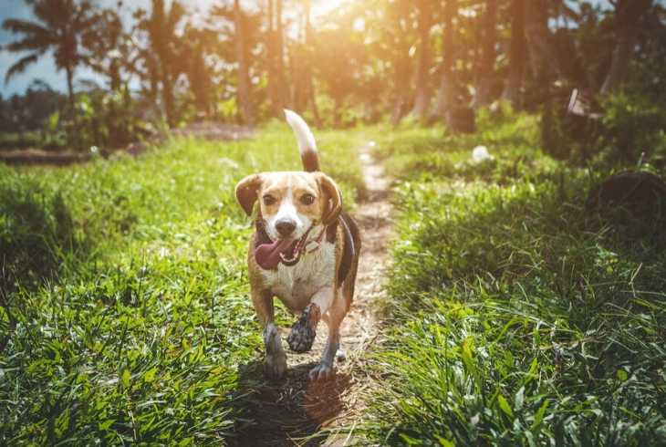Dog running down the garden path
