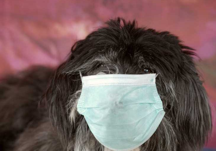 Dog wearing mask to protect from COVID-19