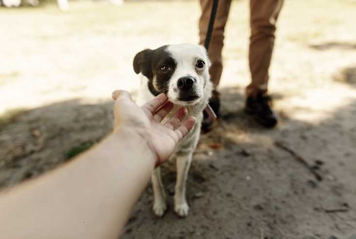 Hand reaching out to touch a puppy