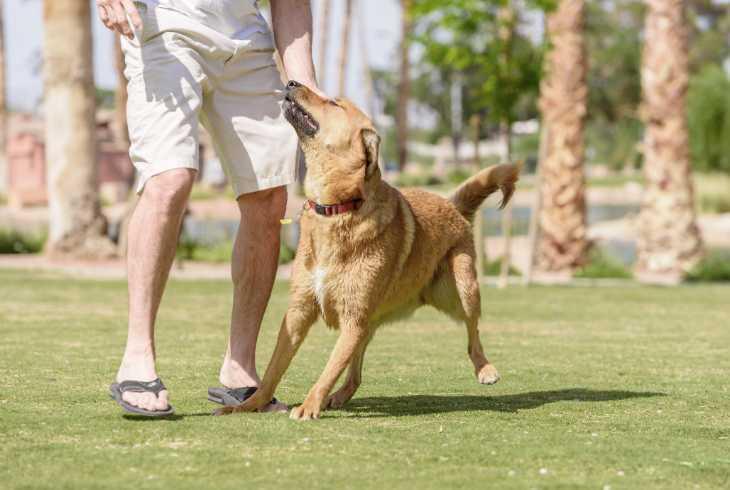 Man training dog off leash