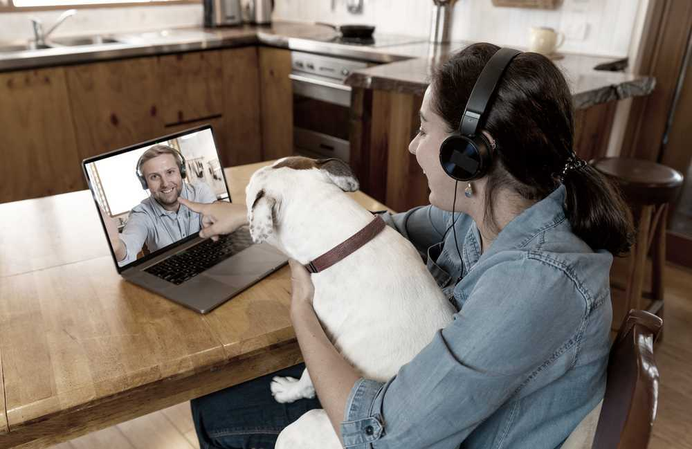 Dog owner and dog talking to vet on a video call