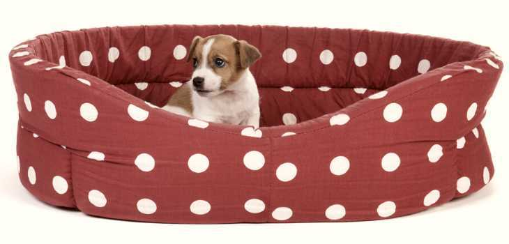 Big red spotted pet bed with small puppy