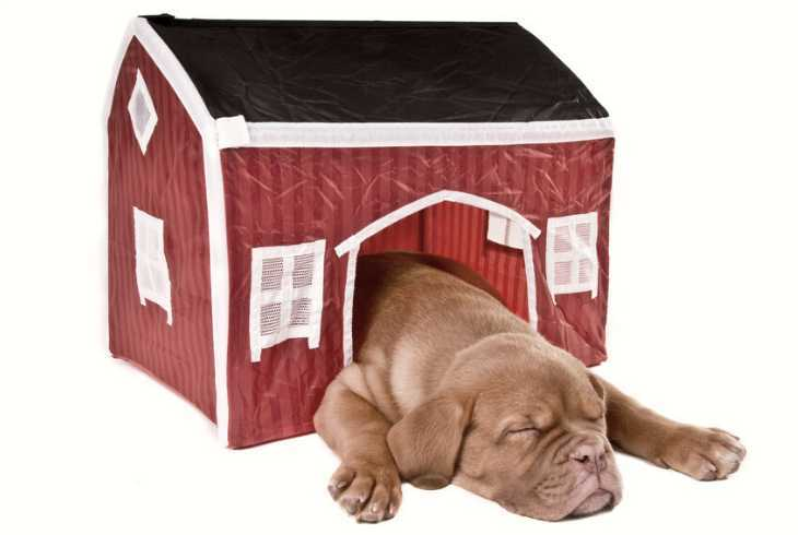 Puppy asleep in a small dog house