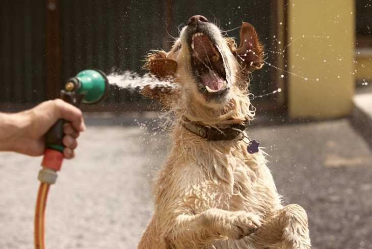 Pup getting a fun drink from a water-hose