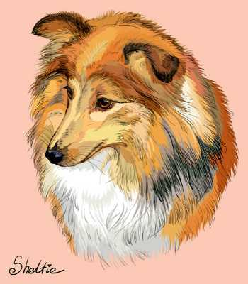 Colorful hand drawing of a Sheltie