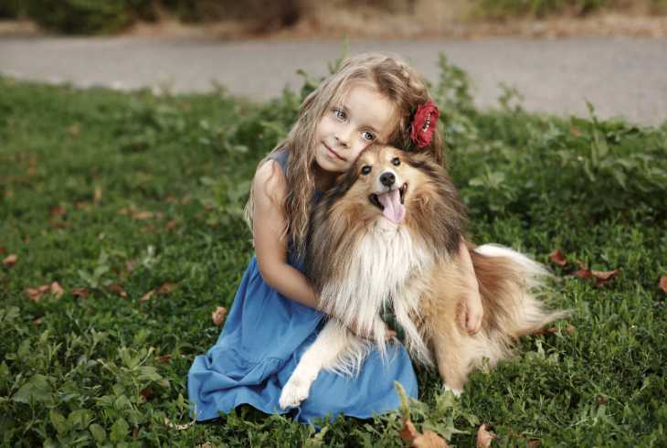 Therapy Sheltie with young girl