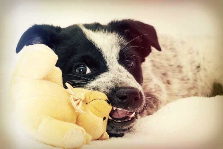Puppy biting on chew toy