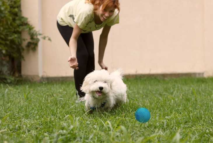Girl practicing playing fetch with her dog