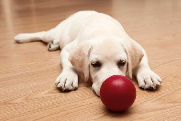 Puppy laying on floor with red ball in front of him