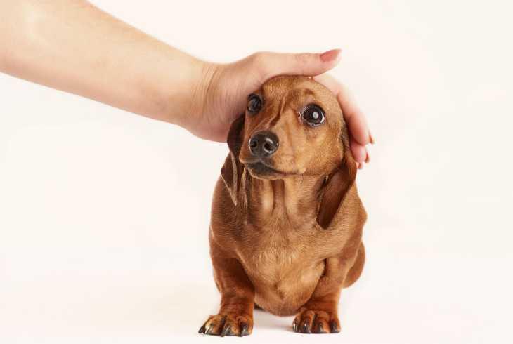 Nervous dog meeting a stranger