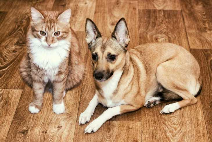 Cat and dog on hardwood floor