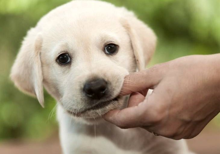 Puppy teething on owners hand