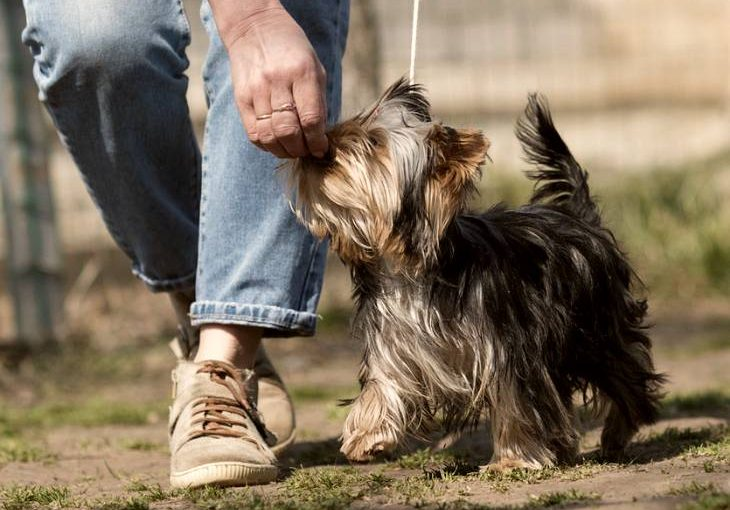 Tips to boost your dog's training