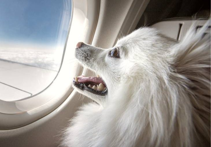 Flying with your dog on an airplane