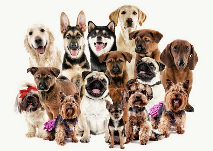 Group of different dog breeds