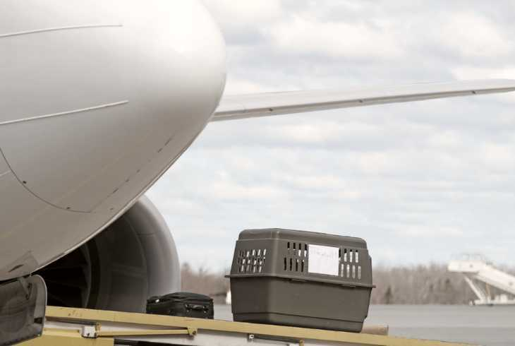 Pet carrier being loaded onto a plane